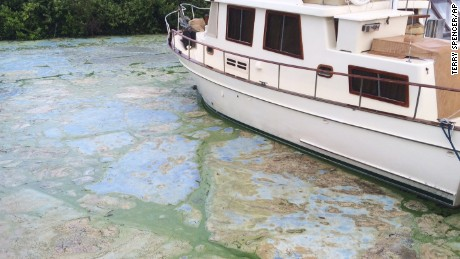 Algae-covered water at Stuart&amp#39s Central Marine boat docks.