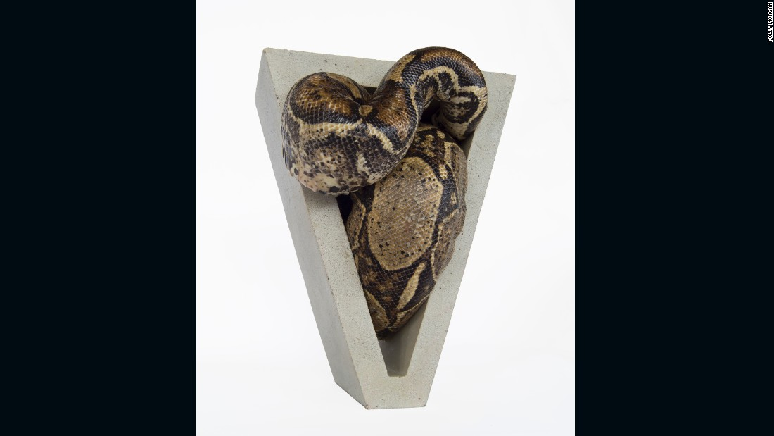 "Polly Morgan used taxidermy for her sculpture, combining Alex's snake in ""A Clockwork Orange"" and the Brutalist architecture of his surroundings into a work with a violent sexual subtext."