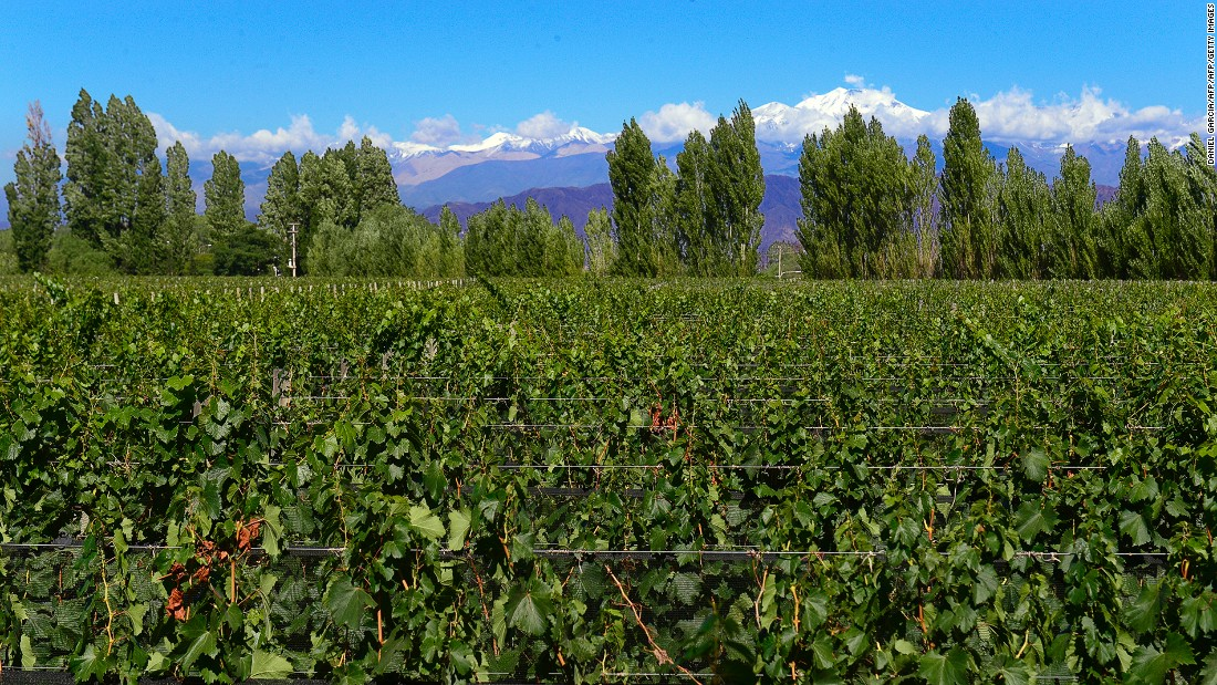 Cycling is a good way to explore the Lujan de Cuyo (pictured here) and Maipu regions in Argentina's Mendoza. The're famous for producing Malbec.