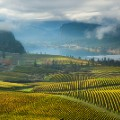 View-of-vineyards-and-Vaseu
