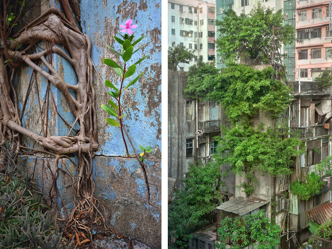 """French photographer Romain Jacquet-Lagrèze was shooting on a Hong Kong rooftop when he noticed a tree """"growing out of nowhere,"""" inspiring this photo series. Jacquet-Lagrèze says the plants reminded him of the city's people, living with """"perseverance, diligence, and independence."""""""