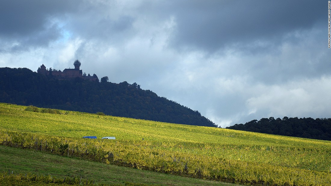 Fields of vineyards lie beneath Haut-Koenigsbourg Castle, one of the most important chateaus in France's Alsace region.