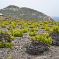 wine trails santorini