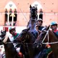 siena horses rearing up