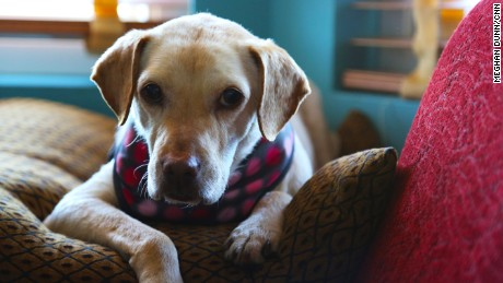 Muttville specializes in the adoption of older dogs and matching dogs with senior citizens
