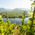 wine trails mosel