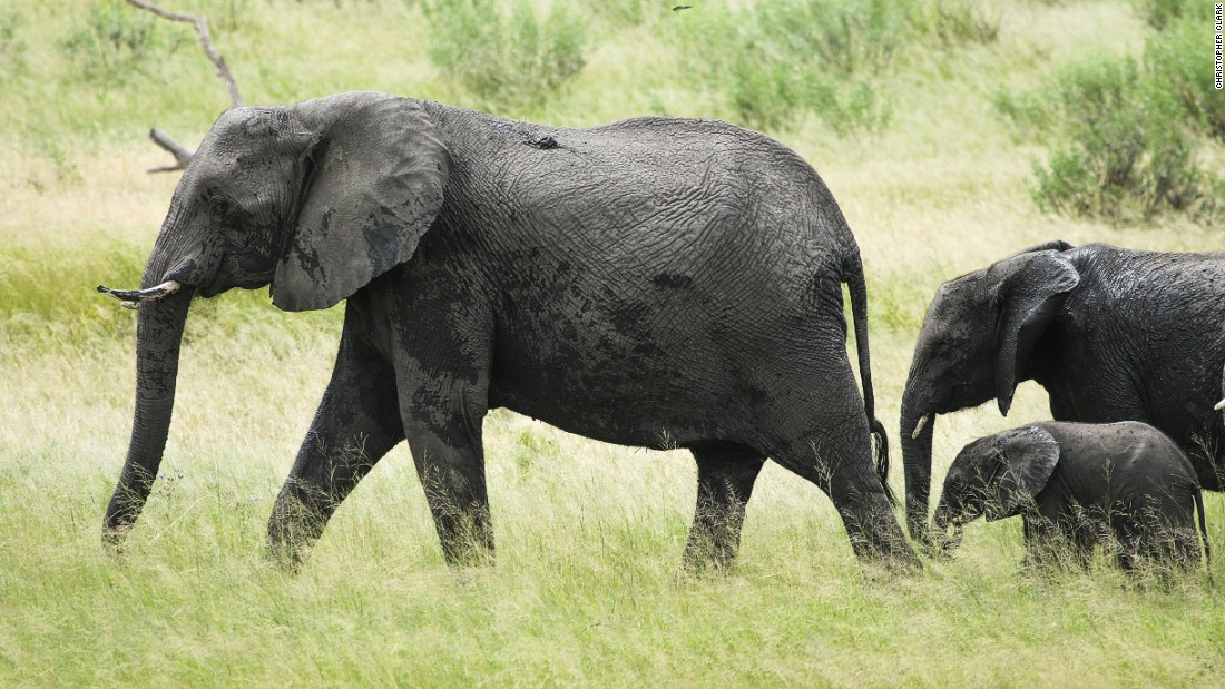 The park is located on an important migration route between Botswana and Angola for African elephants and other wildlife.
