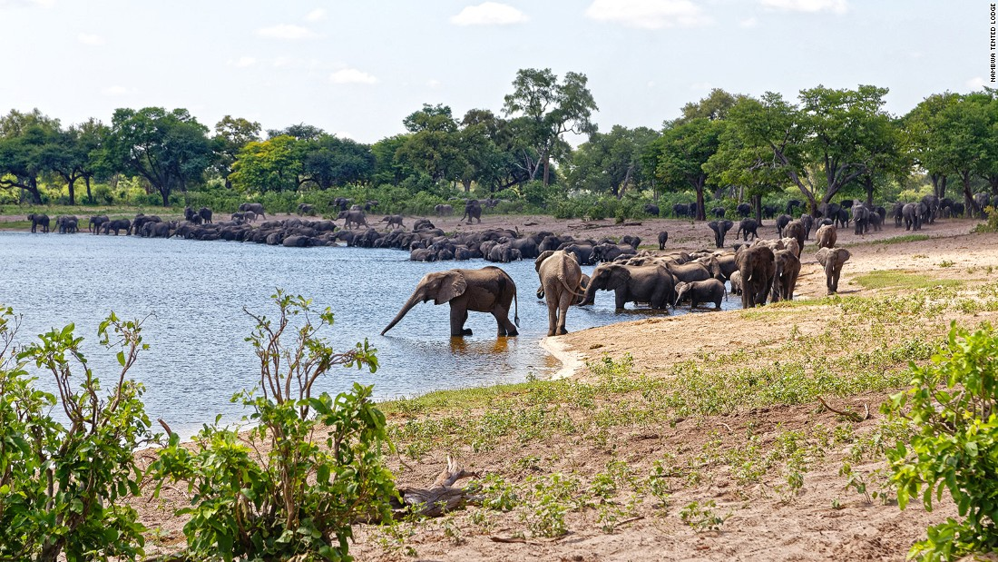The area's wildlife population was decimated during the Border War of the 1970s and '80s but, thanks to Namibia's community-driven conservation efforts, the elephants are now returning to Bwabwata in droves.