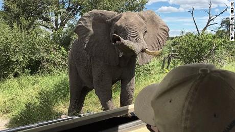 Elephants at Bwabata National Park, Namibia