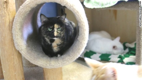 Tree House Humane Society was the country's first cageless, no kill shelter.