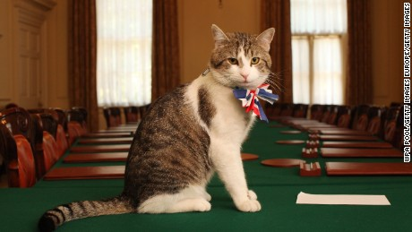 Britain might be leaving the EU, but Larry is remaining at Downing Street.