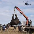 elephants malawi4