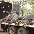 elephants malawi5