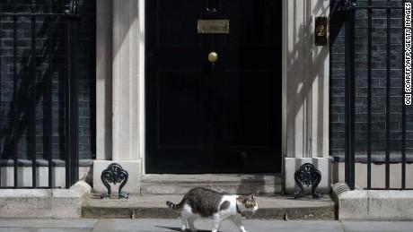 David Cameron: Farewell my feline friend