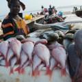 fish market senegal