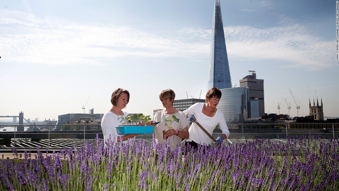 A more modern take on green roofs can be found atop the Numura building in the City of London. The Japanese investment bank's  private rooftop gardens include a terrace  with panoramic views across the River Thames.