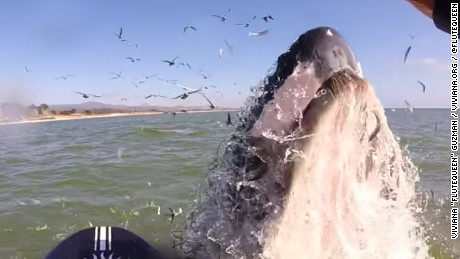 A whale gets up close and personal with a flutist in Half Moon Bay.