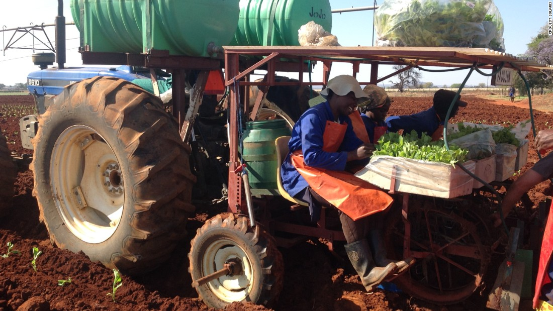 The new crop generates much-needed employment, as demand for traditional tobacco decreases.