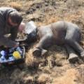 elephant relocation 3