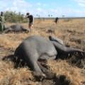elephant relocation 4