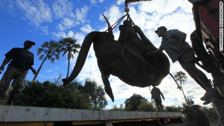 The $1.6 million Malawi relocation project is meant to help restore the African elephant population.