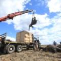 elephant relocation 6