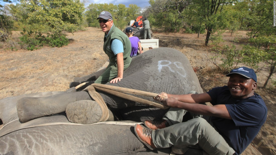 The relocation is being carried out by African Parks, a Johannesburg-based not-for-profit group. Key funders include the the Dutch PostCode Lottery and the Washington-based Wyss Foundation.