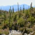 02.lasso the sun.February-Saguaro