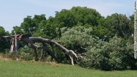 The Oak tree which appeared in 1994's 'The Shawshank Redemption' has fallen, according to Jodie Snavely, Mansfield/Richland County Convention Visitors Bureau, Media Director.