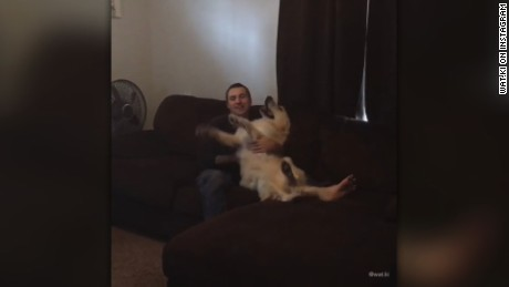 "title: What happens when you tell Watson ""TRUST FALL"" it's so adorable.   He is so trusting. This is the best trick ever. He just falls into your arms A? #watsonandkikovideos  duration: 00:00:00  site: Instagram  author: null  published: Wed Dec 31 1969 19:00:00 GMT-0500 (Eastern Standard Time)  intervention: no  description: null"