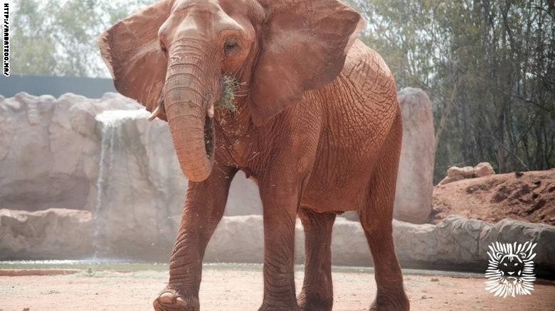 160728180833-morocco-elephant-exlarge-169.jpg