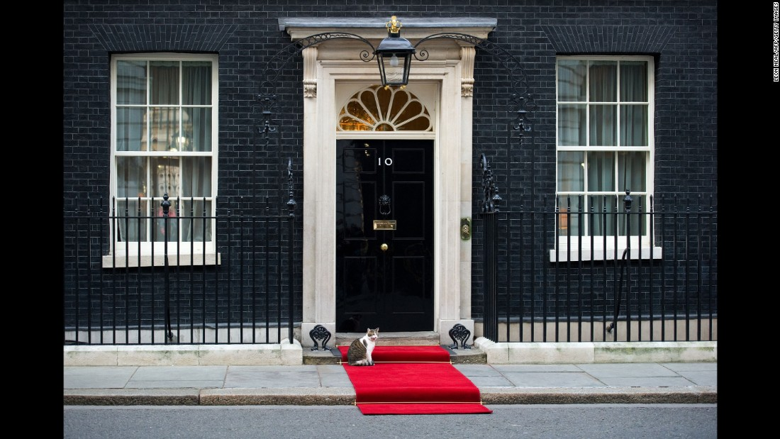 The red carpet is rolled out for heads of state, dignitaries, and... Larry.