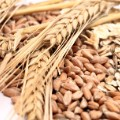 01 plant protein foods