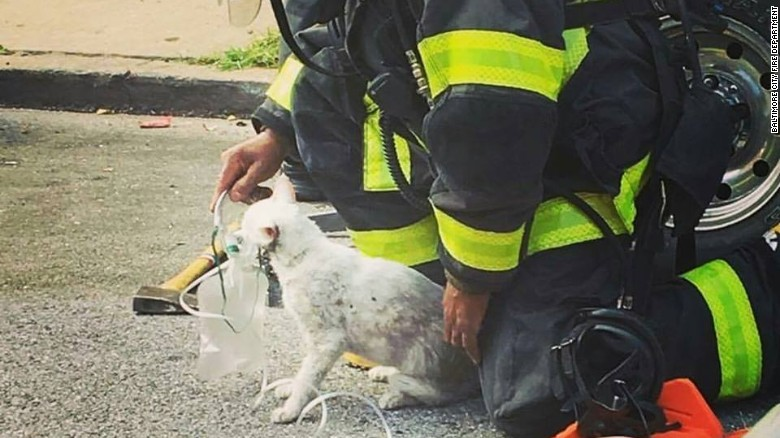 Cat Revived by Firefighters