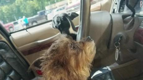 dogs crash into walmart west virginia pkg_00004617.jpg