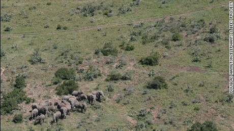 Humans and elephants are living in increased proximity in some African nations.