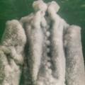 sigalit landau salt bride 7