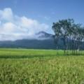 japan mountain day niigata