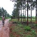 rwanda road