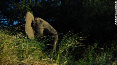 The banks of the Zambezi are home to many wild animals.