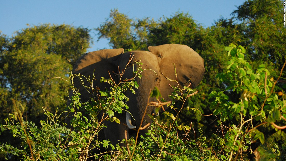 The river is flanked by wildlife reserves including the Victoria Falls and Zambezi National Park, with two special game-viewing sections. Elephants can be seen on the mainland or by the river banks.