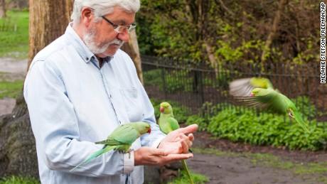 A man feeds wild ring-neck parakeets in London's Hyde Park.