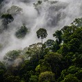 brunei forest mist