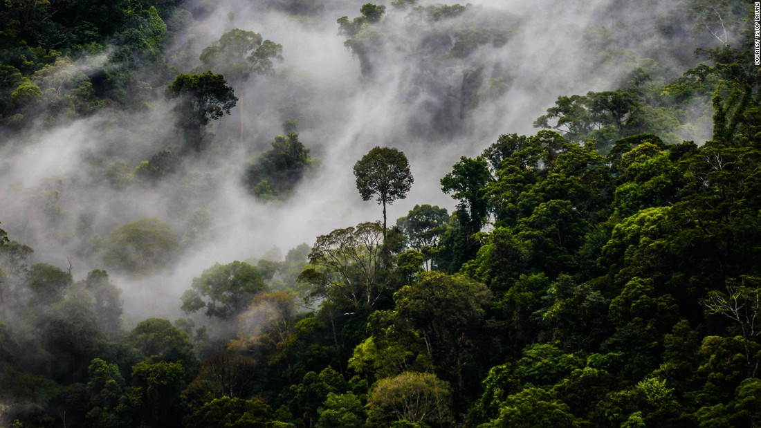 """A paradise for lovers of the natural world, nearly three quarters of Brunei lies under a dense layer of tropical rainforest. While deforestation and habitat loss is a problem in rainforests around the world, and other parts of Borneo, Brunei has made efforts to preserve its flora and fauna, says Shavez. """"Brunei has preserved 70% of its forest, and 58% is legally protected because of the Heart of Borneo Initiative."""" <a href=""""http://wwf.panda.org/what_we_do/where_we_work/borneo_forests/about_borneo_forests/declaration.cfm"""" target=""""_blank"""">The Heart of Borneo Initiative</a> is a joint effort by the governments of Brunei, Indonesia and Malaysia, who in 2007 initiated a joint declaration to protect the Borneo's biodiversity through creating protected areas and promoting sustainability on the island."""