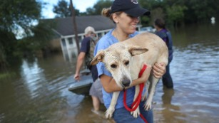 Ann Chapman carries a dog she helped rescue in Baton Rouge.