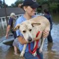 11 la-flooding 0815