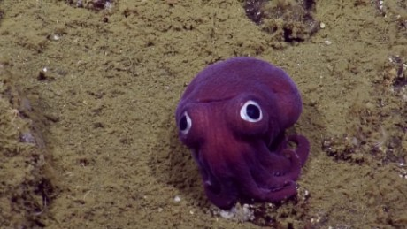 cnnee pkg digital calamar morado descubierto _00000914