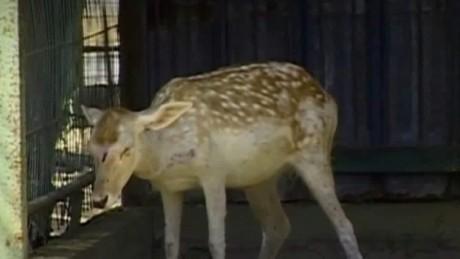 gaza zoo forced to close ian lee pkg_00000104