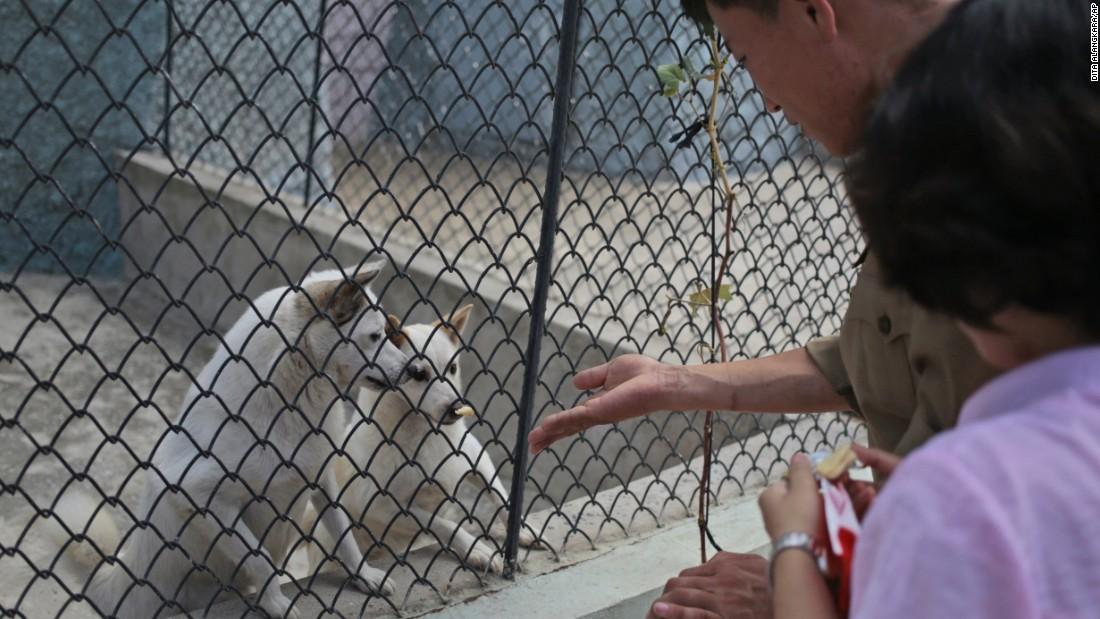 The Pyongyang Zoo 'dog pavilion' boasts everything from German shepherds, Saint Bernards and Shih Tzus.