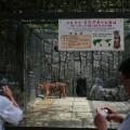 01 North Korea zoo